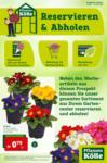 Pflanzen-Kölle Gartencenter Reservieren & Abholen - bis 24.02.2021