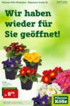 Pflanzen-Kölle Gartencenter Wiedereröffnung Wiesbaden - bis 24.02.2021