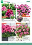 BayWa Bau- & Gartenmärkte BayWa Bau & Garten: Pflanzen für Haus und Garten - bis 30.06.2021