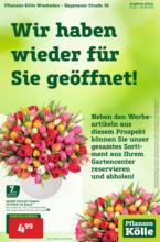 Pflanzen-Kölle: Wir haben wieder für Sie geöffnet in Wiesbaden!