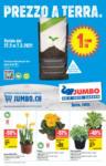 Jumbo Offerte Jumbo - al 14.03.2021