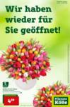 Pflanzen-Kölle Gartencenter Wir haben wieder für Sie geöffnet - bis 03.03.2021