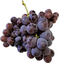 Trauben - Weintrauben