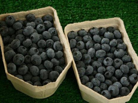 Beere - Heidelbeeren/Blaubeeren Schale