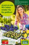 Pflanzen-Kölle Gartencenter Wir haben wieder für Sie geöffnet - bis 17.03.2021