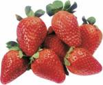 Volg Erdbeeren