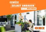 OBI OBI: Gemüse selbst anbauen - bis 17.04.2021