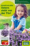 Pflanzen-Kölle Gartencenter Ostern steht vor der Tür - bis 03.04.2021