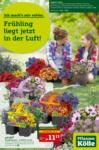 Pflanzen-Kölle Gartencenter Frühling liegt jetzt in der Luft - bis 21.04.2021