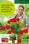 Pflanzen-Kölle Gartencenter Pflanzen-Kölle: Wir haben weiterhin für Sie geöffnet! - bis 14.04.2021