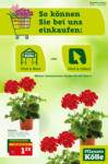 Pflanzen-Kölle Gartencenter Click & Meet & Collect - bis 14.04.2021