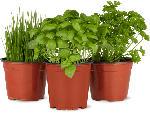 Migros Vaud Herbes aromatiques