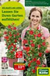 Pflanzen-Kölle Gartencenter Lassen Sie Ihren Garten aufblühen - bis 25.04.2021