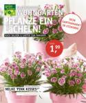 Oldenburger Wohngarten GmbH & Co. KG Pflanze ein Lächeln! - bis 21.04.2021