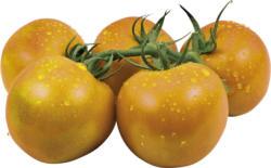 Tomaten - Strauchtomaten orange