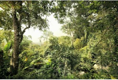 Komar Fototapete Vlies Dschungel 368 cm x 248 cm