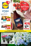 Lidl Lidl Attuale - bis 05.05.2021
