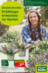 Pflanzen-Kölle Gartencenter Frühlingserwachen im Garten! - bis 05.05.2021