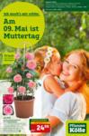 Pflanzen-Kölle Gartencenter Am 09.Mai ist Muttertag - bis 09.05.2021