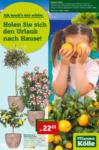 Pflanzen-Kölle Gartencenter Holen Sie sich den Urlaub nach Hause! - bis 19.05.2021