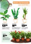 OBI Obi: Blütenpracht den ganzen Sommer - bis 15.05.2021