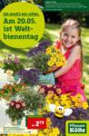 Pflanzen-Kölle Gartencenter Am 20.05. ist Weltbienentag - bis 26.05.2021