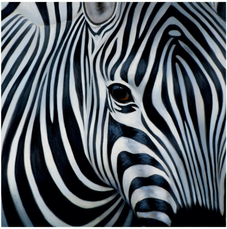 Bild Zebra