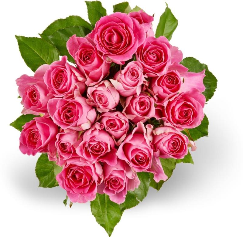 Mini-roses M-Classic, Fairtrade