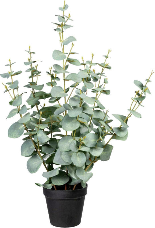 Kunstpflanze Eukalypthus I in Grün