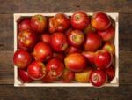Lidl Rote Äpfel