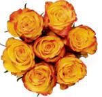 Migros Vaud Roses nobles, Fairtrade