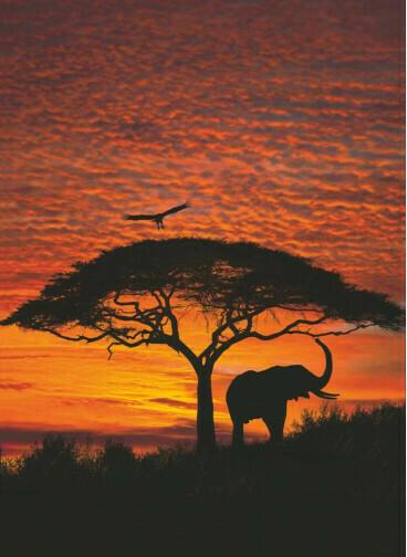 Fototapete African Sunset ca. 194 x 270 cm