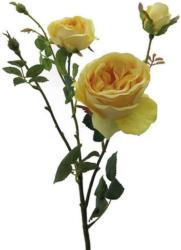 Rose Elke Hellgelb