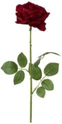 Rose Barbara Rot