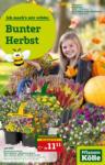 Pflanzen-Kölle Gartencenter Bunter Herbst - bis 12.09.2021