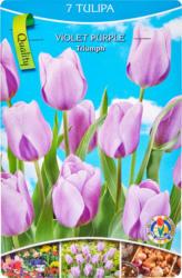 Tulipes, violettes, 1 bouquet