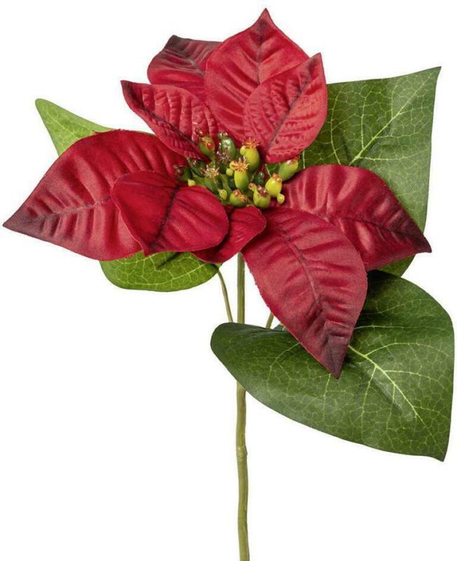 Weihnachtsstern Burgi Rot L: ca. 35 cm