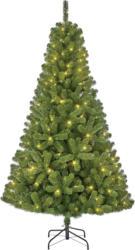 Weihnachtsbaum Charlton in Grün