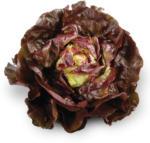 SPAR Kopfsalat rot