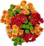 Migros Aare M-Classic Chrysanthemen Ton in Ton