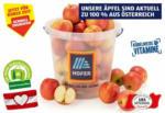 HOFER HOFER MARKTPLATZ Äpfel aus Österreich im Kübel, ca. 6 kg - bis 28.10.2021