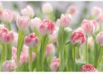 Komar Papier-Fototapete Secret Garden, 8-teilig, 368x254 cm