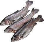 Regenbogenforelle ausgenommen Aquakultur, je 100 g