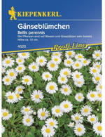 Kiepenkerl Wiesen-Gänseblümchen Profi-Line
