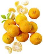 Spanien Mandarinen  Kennzeichnung siehe Etikett, jedes 750-g-Netz