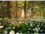 Möbelix Keilrahmenbild Sweet Woodruff 116x84cm Multicolor - bis 24.02.2020