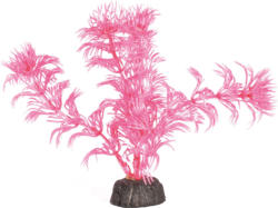 Amazonas Nano Pflanze pink 12cm