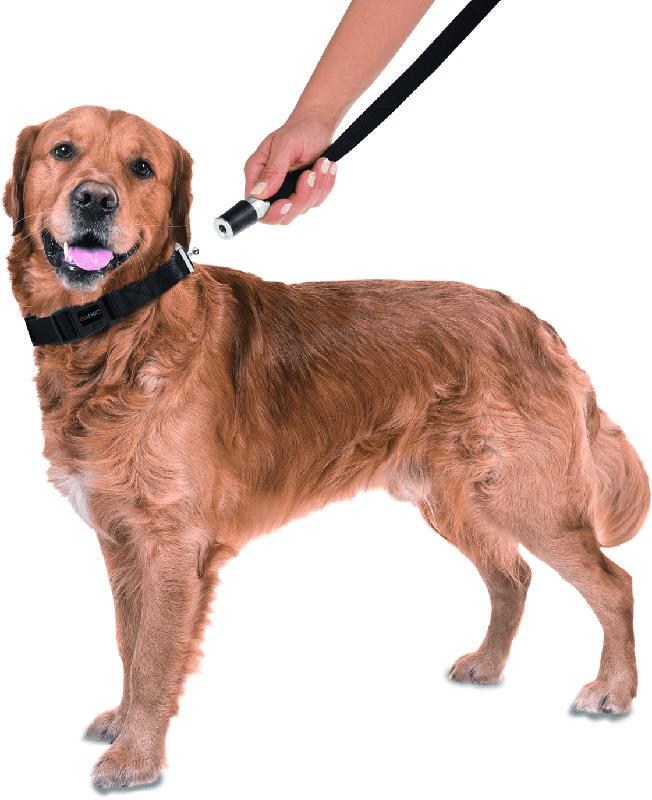 GoLeyGo Hundeleine und Halsband für Hunde, Größe L, schwarz