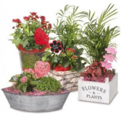 Muttertags-Pflanzen-Sortiment