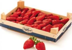 SanLucar Fruchtige Premium Erdbeeren